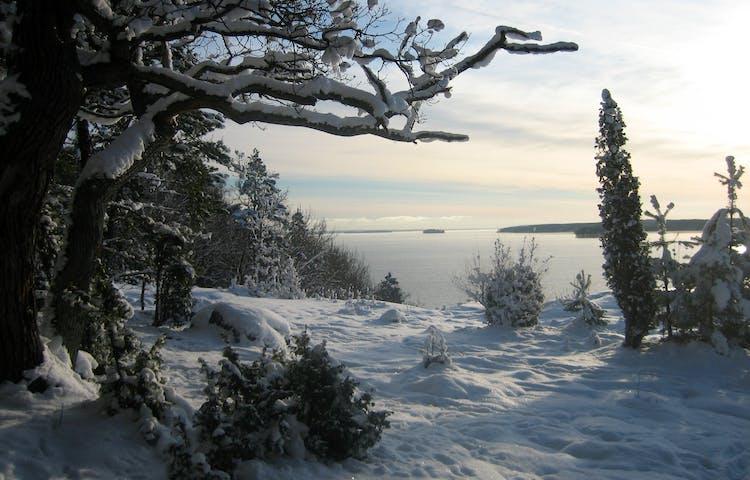Ek- och enbackar på vintern med utsikt över Mälaren.