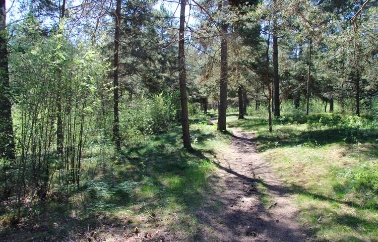 Bred stig i skog.