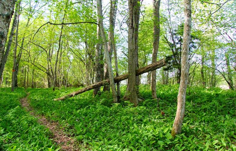 Grönskande skog.