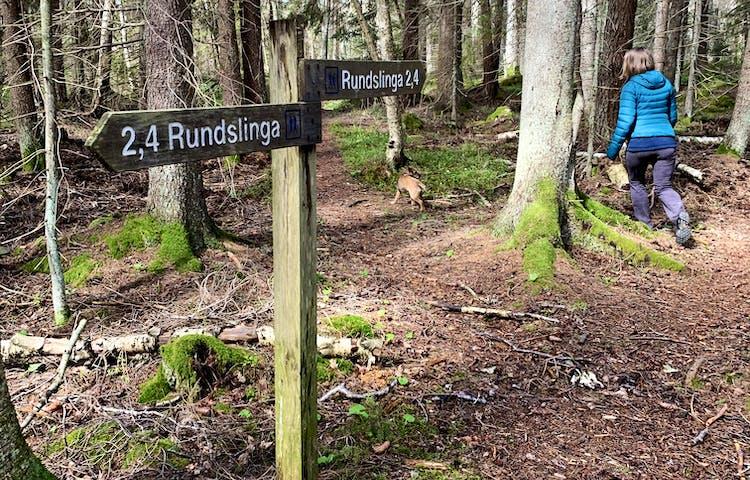 Rundslinga i Häverö-Bergby naturreservat. Foto: Lena Malmström
