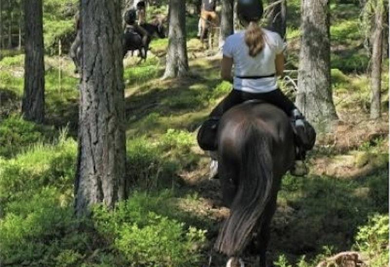 Mit dem Pferd und Kajak im Tiveden Nationalpark