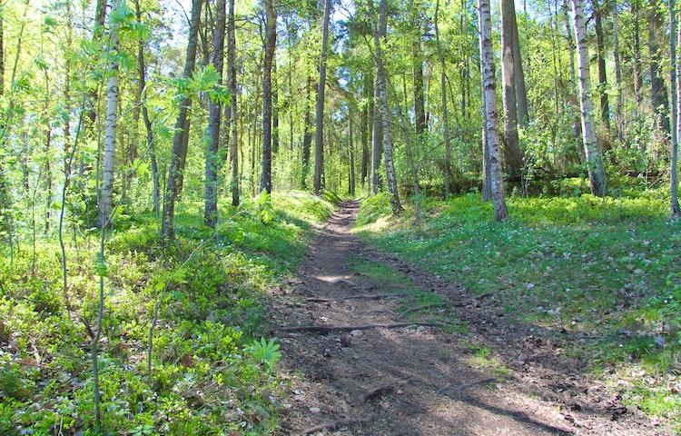 Stig som går upp för en sluttning, omgärdad av träd.