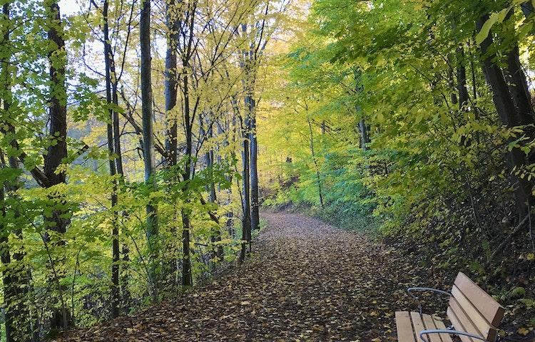 Bild på lummig skogsväg med en soffa utmed slingan