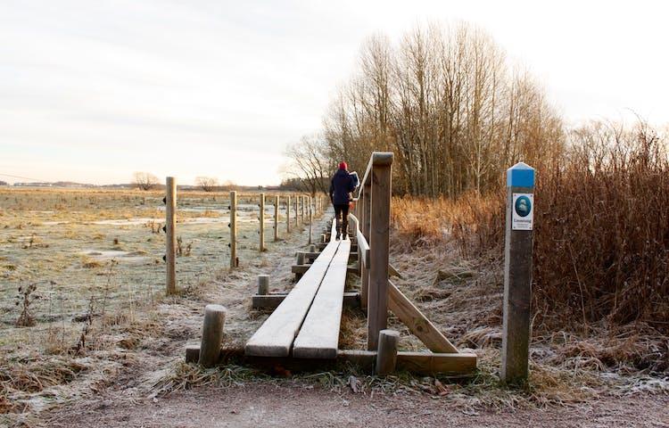 En smal spång med ett handräcke löper längs med en stängslad hage. I början av spången står en låg stolpe med markering för Linnéstigen.