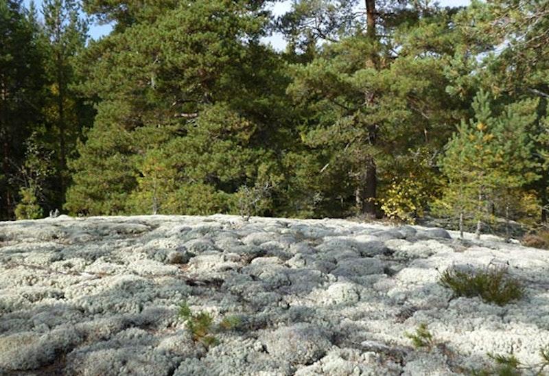 Hällmark, Utnäset. Foto: Elisabeth Karlsson