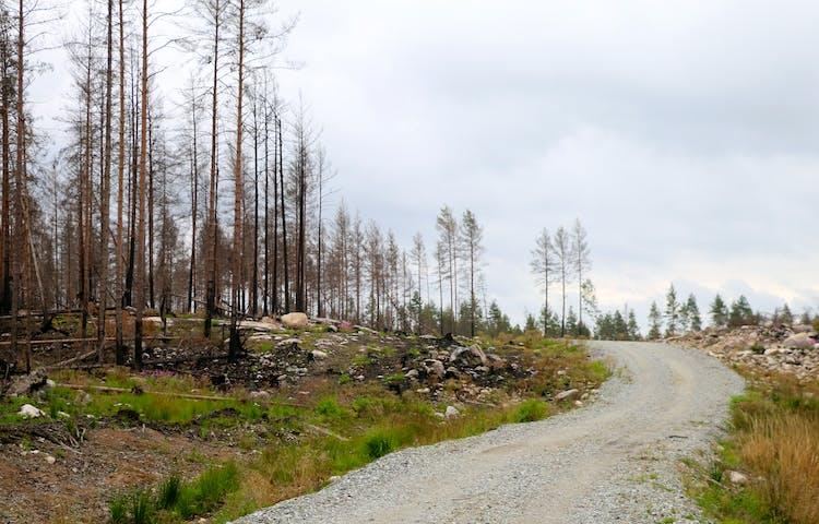 Grusväg med brandområdet synligt till vänster i bild.