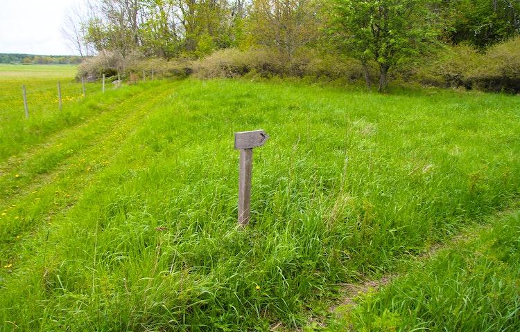 Gräsområde med buskar i bakgrunden, en smal stig i gräset. En vägvisningsskylt i trä.