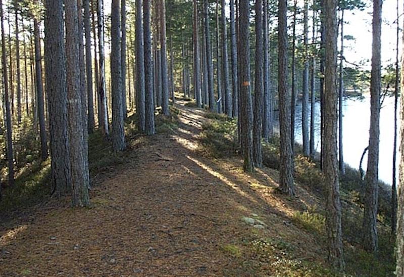 Kråksjöåsen-Kojemossen, Naturreservat