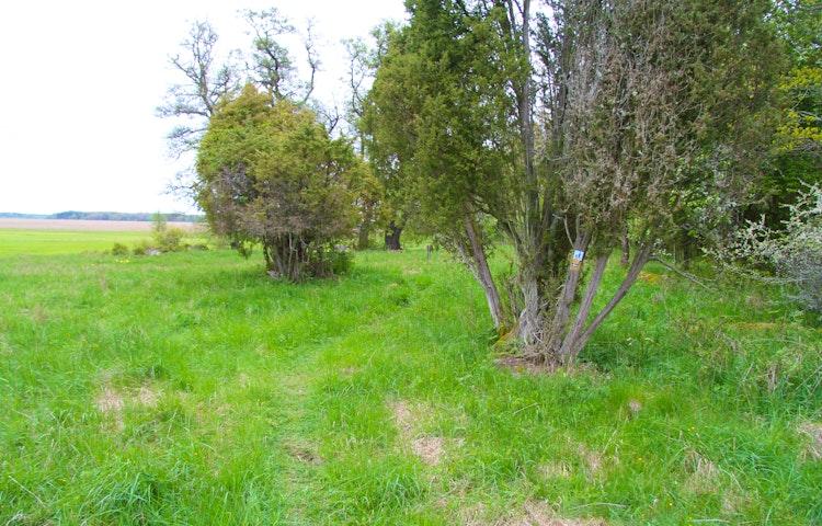 Gräsområde och ett par enbuskar.