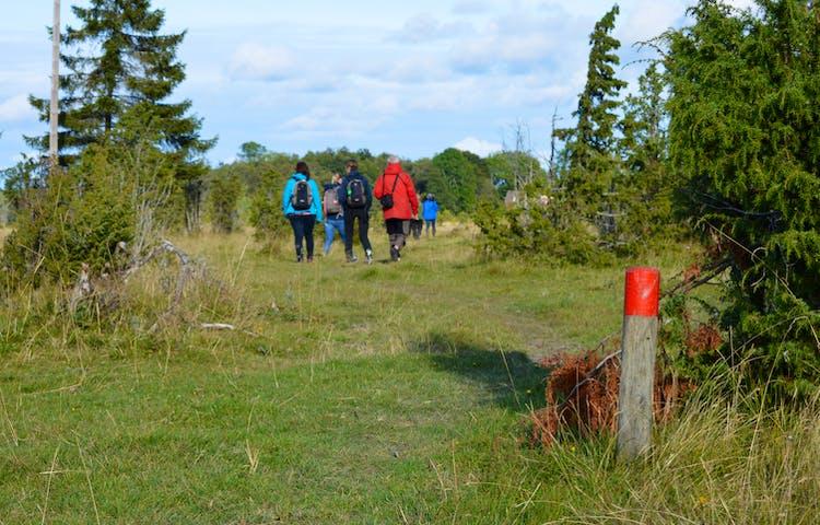 En grupp vuxna människor promenerar längs en stig i naturen. Vid ena kanten av stigen står en kort stolpe med röd markering. Stigen är upptrampad men något ojämn och underlaget är gräs. På båda sidorna av stigen växer träd.