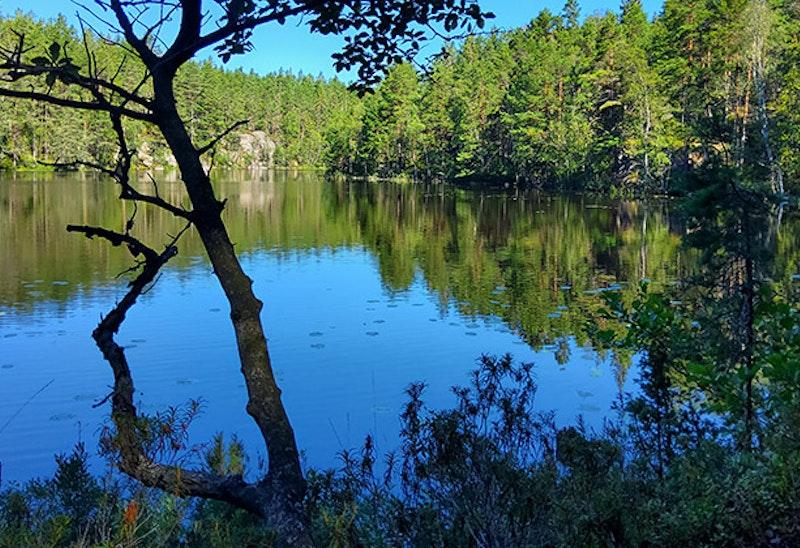 Stora Fjället, Naturreservat