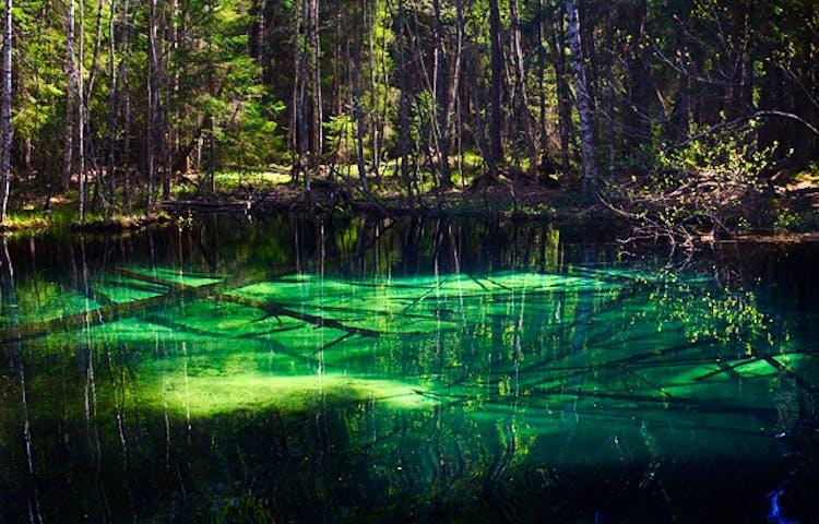 En klart grön vattenkälla med skog runt omkring. Under vattnet ligger fallna träd.