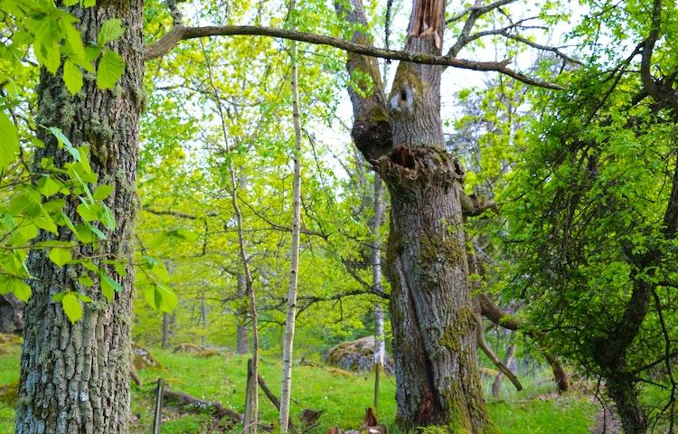 Flera olika träd.