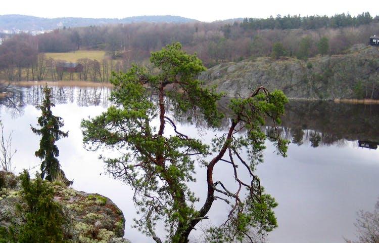 Vy över Brakmarsviken och Hammarbergets naturreservat. Foto: Länsstyrelsen.
