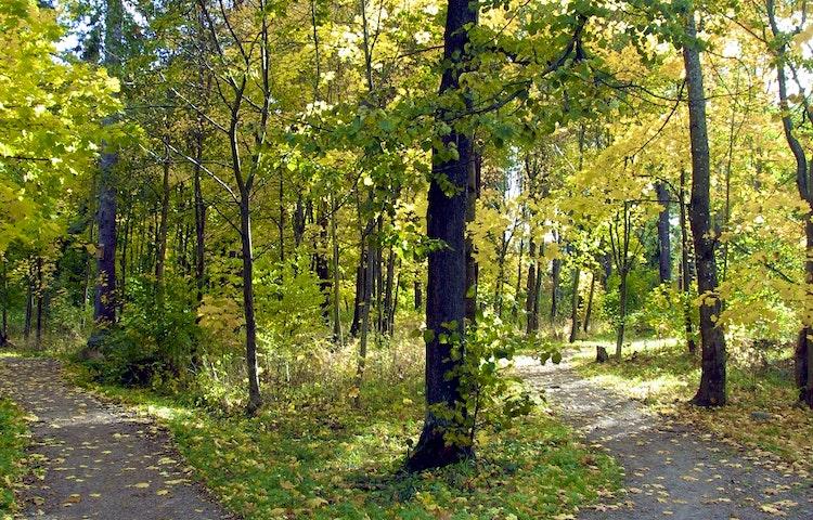 Motionspår i en höstskog.