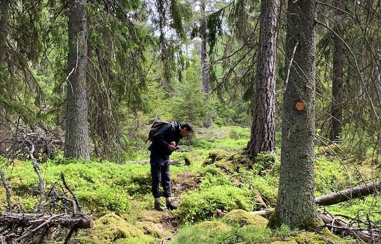 Mycket spännande att se längs vandringsleden i Gullunge naturreservat. Foto: Lena Malmström