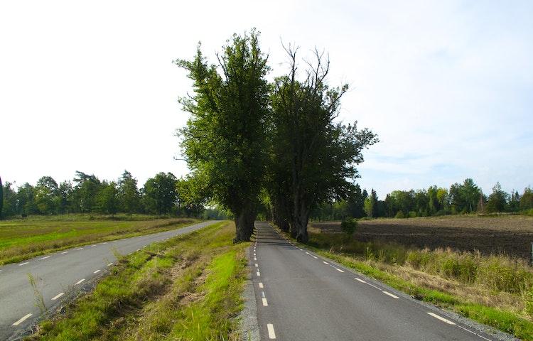 Allé längs vägen nära Ängsö slott.