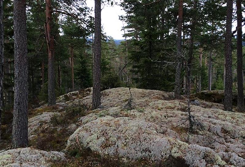 Foto: Ingrid Andrén