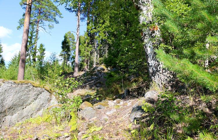 Stig som klättrar brant. Björk med orange ledmarkering.