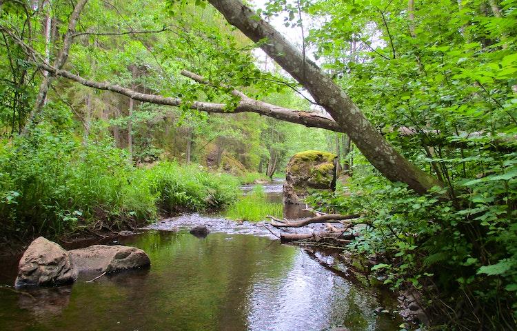 Hedströmmen med stenar i vattnet och träd på sidorna.