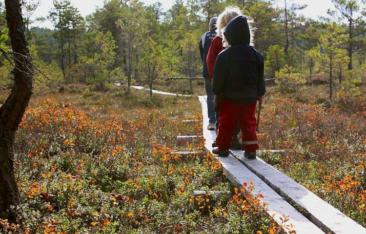 Två barn och en vuxen går på en smal träspång över en mosse.