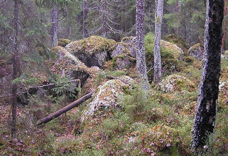 Pippelåsarna, Naturreservat