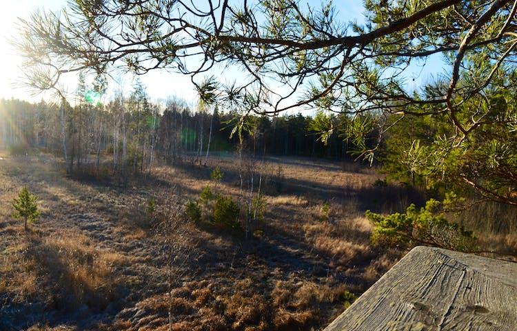 Utsikten från tornet är över ett öppet område med örter, kantat av skogens träd.
