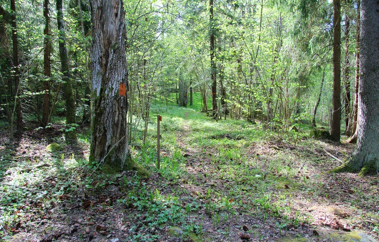 Orange markering på träd och en orange skylt som visar vägen.
