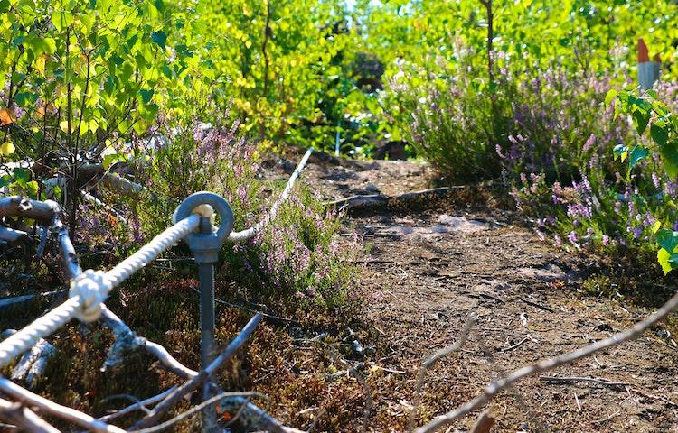 Rep som går igenom en metallögla nära marken.