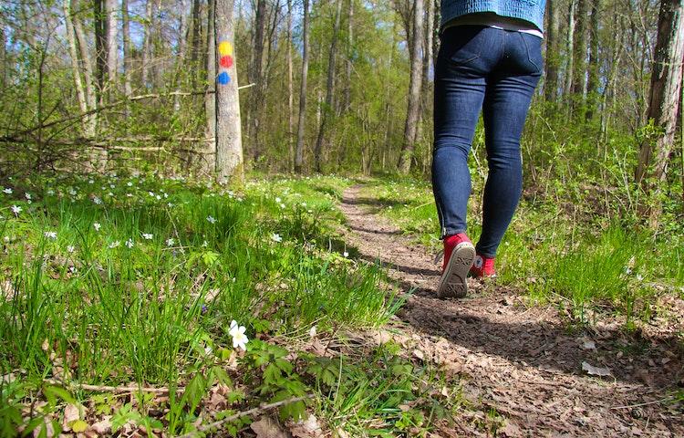Stig kantad med vitsippor, en person går bortåt på stigen. Gul, blå och röd ledmarkering på träd.