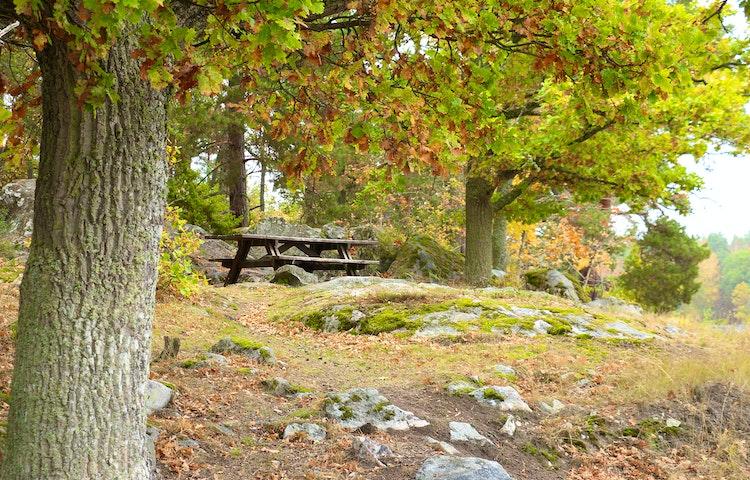 Picknickbänk bland ekar på en liten höjd.