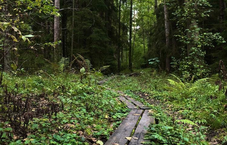 Bommar leder fram genom skogen.