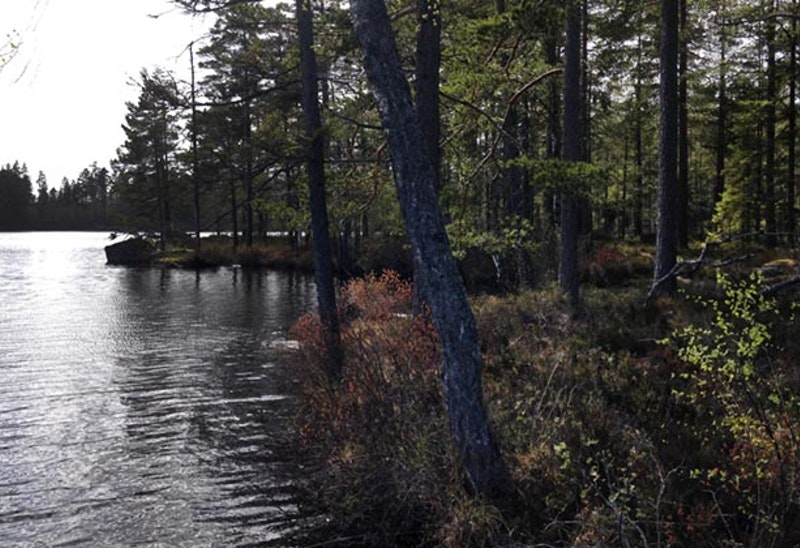 Vargavidderna, Naturreservat
