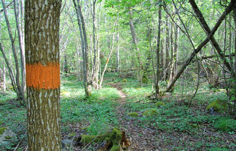 Orangemarkerat träd intill stig.
