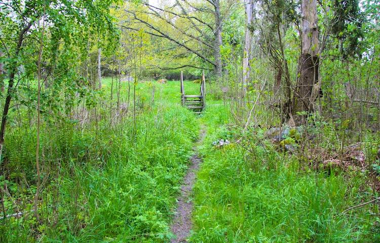 En stig i gräs som leder fram till en stätta in i en beteshage.