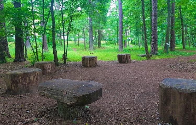 En skog. Bord av trä.