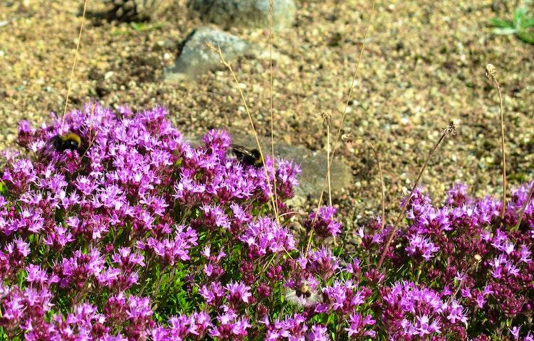 Många insekter trivs i de torra coh varma markerna. Foto: Lena Malmström
