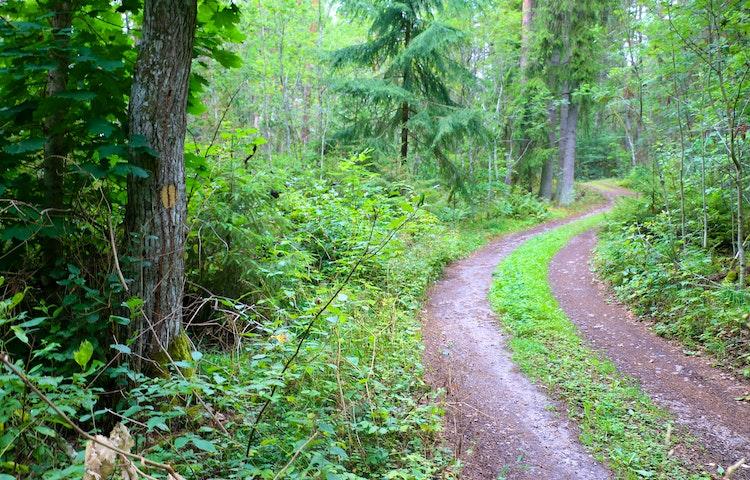 Skogsbilväg som leder in i naturreservatet.