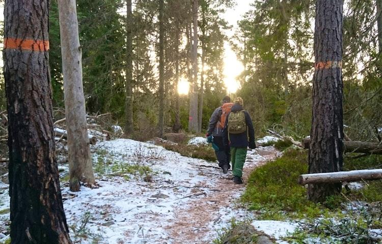 Två vuxna med varsin ryggsäck på ryggen går på en ojämn skogsstig. På två trädstammar finns orange markeringar för Upplandsleden.
