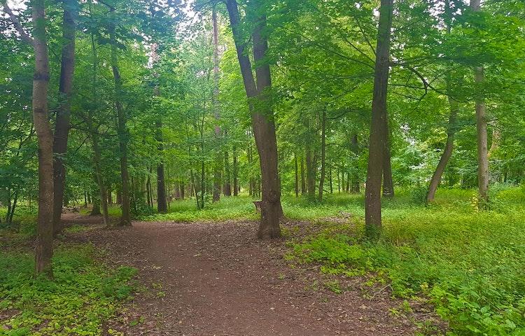 En skogsväg.