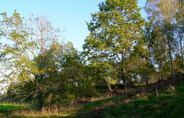 Trädklädd hage