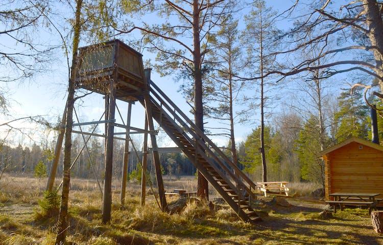 Ett högt fågeltorn med trappa upp till plattformen