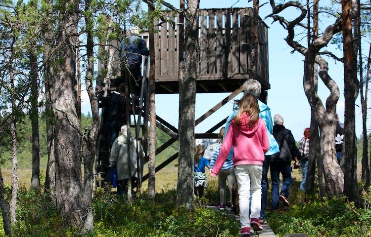 Tre vuxna är på väg upp till ett fågeltorn som står framför en mosse. Det är många människor runtom fågeltornet och flera träd.