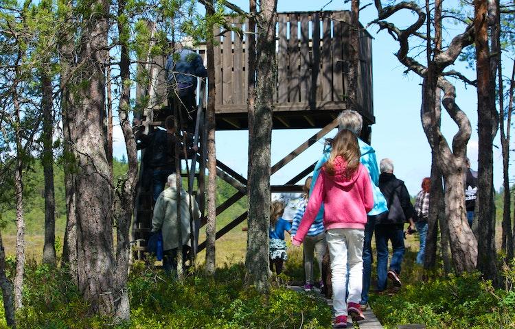En grupp människor går på en spång till ett fågeltorn. Tornet har en våning som nås av en trappa med handräcke.