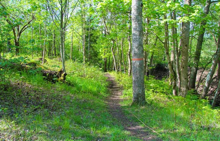 Stig i skogen med ett orangemarkerat träd på sidan som visar vägen.