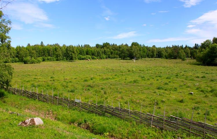 En lång gärdesgård omgärdar en betesmark.