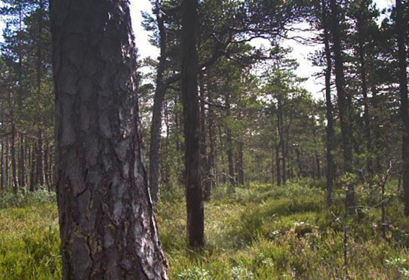 Boramossen, Naturreservat