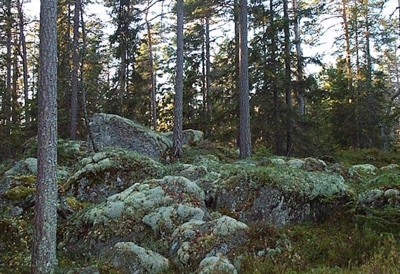 Juarbergen. Foto: Astrid Andersen