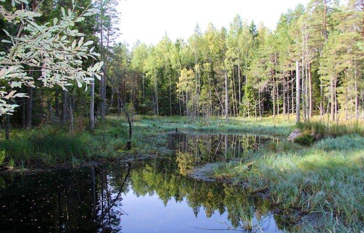 Vatten med skog runtikring.