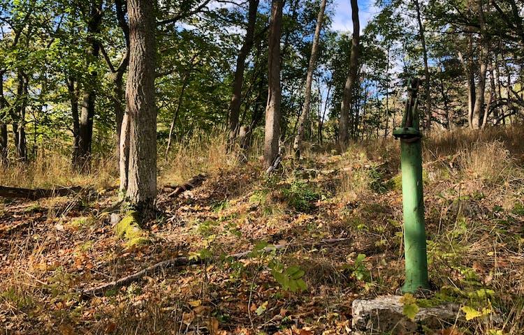 En grön vattenpump med en ekbacke bakom.